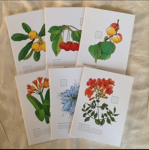 6 Botanical Note Cards